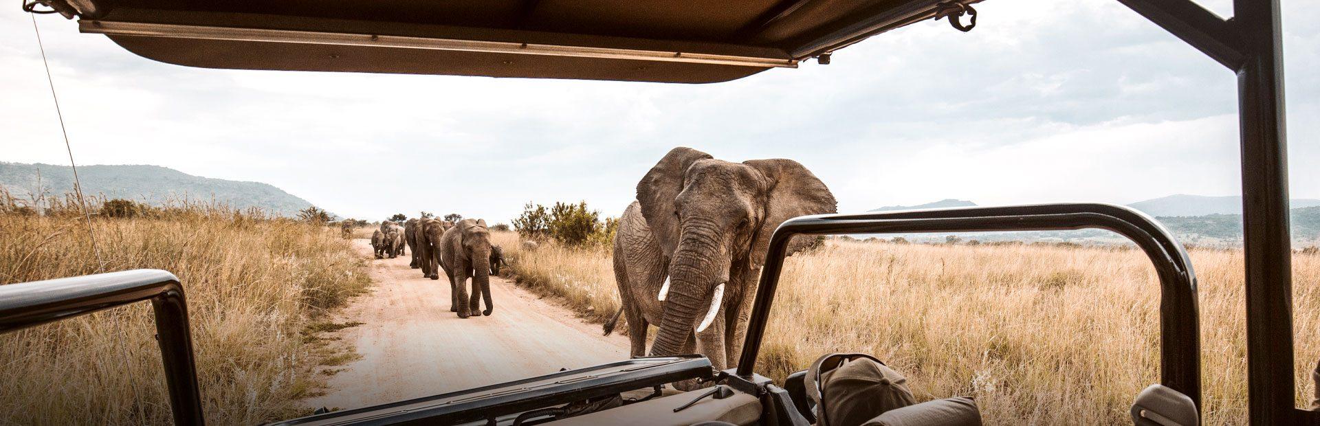 Afrika Reisen mit Safari im Nationalpark