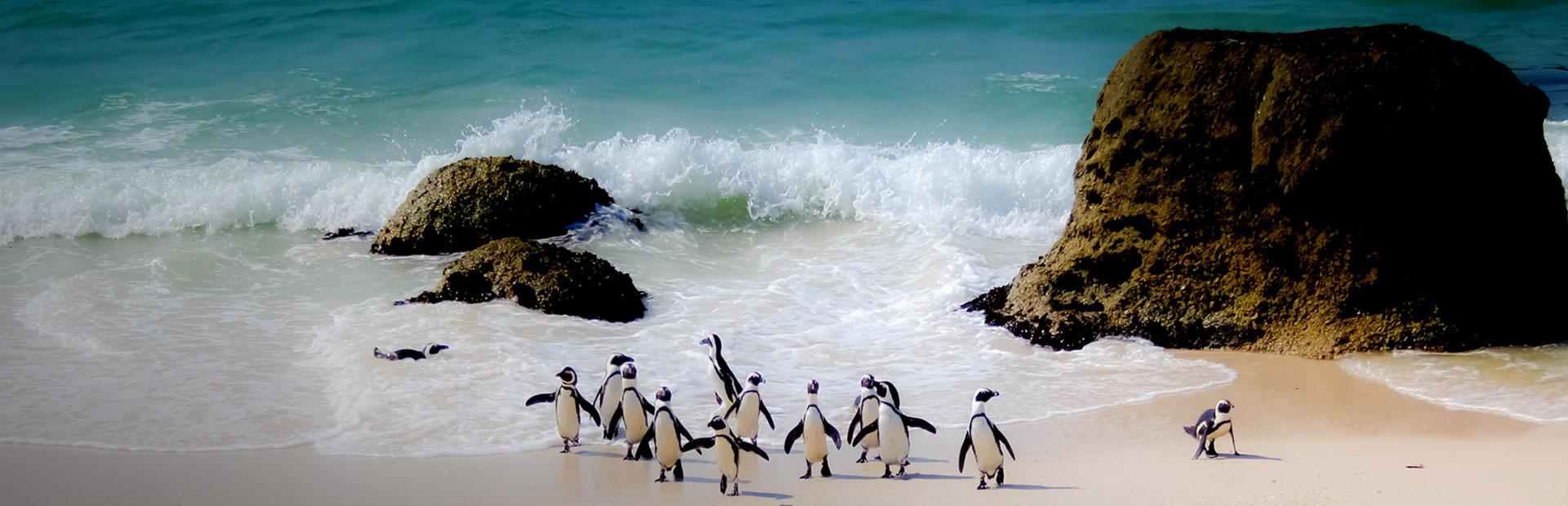 Pinguine bei Südafrika Reisen mit erlebe
